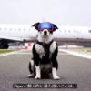 鳥の激突から飛行機を守る犬の大活躍!