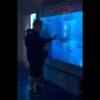 水族館のガラスを叩いた男性に悲劇が!サメが突撃してくる衝撃映像!