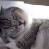 猫の日にふさわしい「にゃんこ動画」!顔を洗う猫のスローモーションが可愛すぎる!