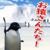 カオス化の一途を辿るバーチャルユーチューバー界。遂にペンギンユーチューバーが登場!