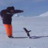 不用意にペンギンに近づくな!近づきすぎた男の末路・・・。