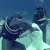 危険な仕事!サメにかかったフックを取り外すプロの技!