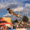 警察犬としても大活躍している「ベルジアン・シェパード・ドッグ・マリノア」の高すぎる身体能力!