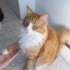 猫が「お手・おかわり」してる!!そのトレーニング方法も一緒に公開!