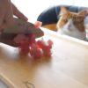 猫も食べられる本格的な寿司!我慢できずにかぶりつく猫たちに癒される!!