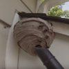 衝撃映像!ハチの巣を掃除機片手に襲撃する男!