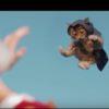 大人気ゲーム「アサシンクリード(ASSASSIN'S CREED)」を猫がリメイク!?可愛い子猫4匹が2人のターゲットを追い詰める!