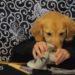 犬サラリーマンの一日!犬との二人羽織が人間臭すぎて面白い!
