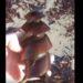 巨大なネジのような物体から出てきたのはサメ!?特殊な卵を産むポートジャクソンネコザメ( Port Jackson shark)の貴重映像!